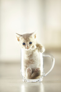 Cute Kitty sits in Cup
