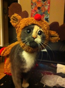 She's an adorable reindeer kitty hybrid.