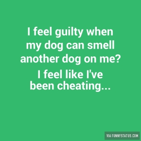 i-feel-guilty-when-my-dog-can-smell-another-dog-on-6882