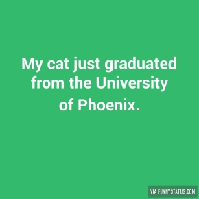 my-cat-just-graduated-from-the-university-of-phoenix-4262