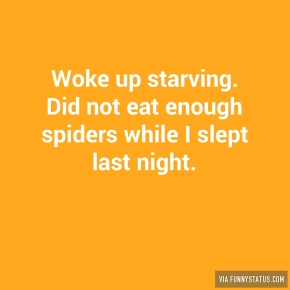woke-up-starving-did-not-eat-enough-spiders-while-2126