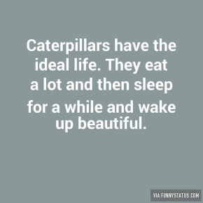 caterpillars-have-the-ideal-life-they-eat-a-lot-and-6930